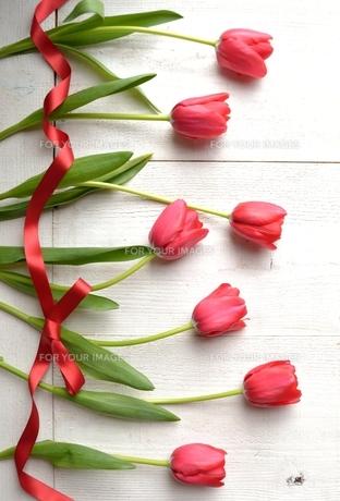 赤いチューリップとリボン 白木材背景の写真素材 [FYI00986922]