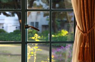 洋間の窓から見える庭の緑の写真素材 [FYI00987299]