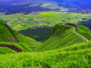 緑豊かな崖の道の写真素材 [FYI00987367]
