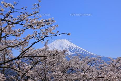 富士山の写真素材 [FYI00987397]