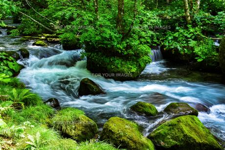 渓流の景色の写真素材 [FYI00987801]