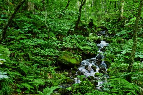 渓流の景色の写真素材 [FYI00987803]