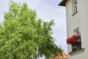 ヴァイサーヒルシュの窓飾り(ドイツ・ドレスデン)の写真素材 [FYI00987840]