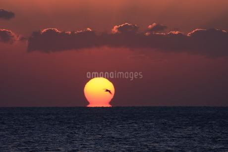 戌年の初日の出と酉の後姿の写真素材 [FYI00987869]