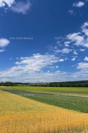 麦畑とジャガイモ畑の素材 [FYI00988906]