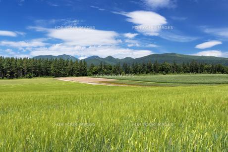 麦畑と十勝岳の素材 [FYI00988926]