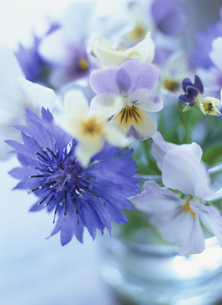 セグルマギクとビオラの花の素材 [FYI00989907]