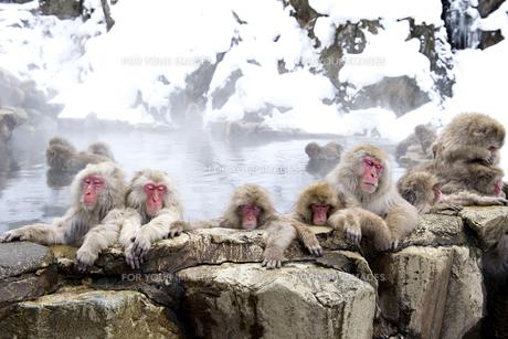 温泉に入る猿の素材 [FYI00992341]