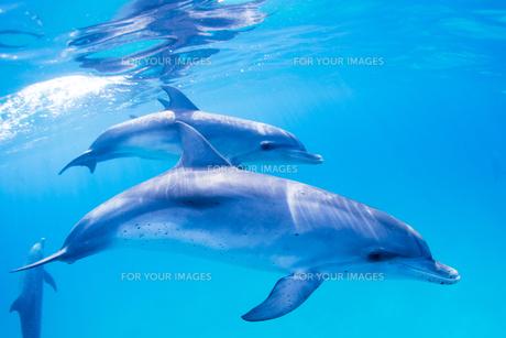青い海のイルカの素材 [FYI00993368]