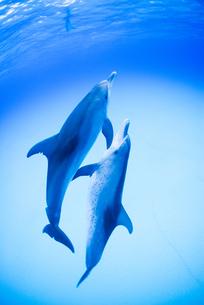 青い海、白砂の中を泳ぐ2頭のイルカの素材 [FYI00993493]