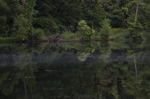 鳥沼公園の素材 [FYI00998701]