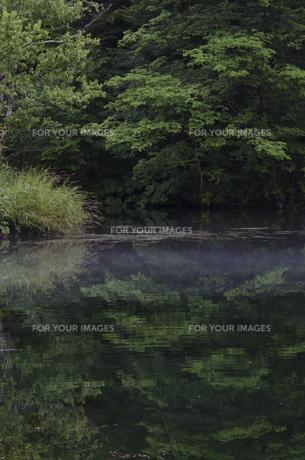鳥沼公園の素材 [FYI00998797]