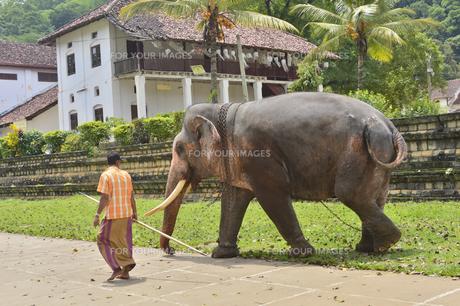 象の素材 [FYI01000116]