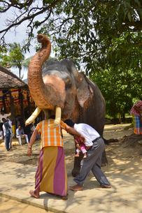 象をくぐると幸せになると言われているの素材 [FYI01000293]