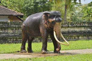 象の素材 [FYI01000355]