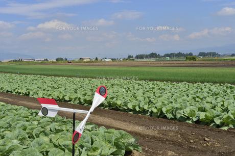 野菜畑の素材 [FYI01000408]