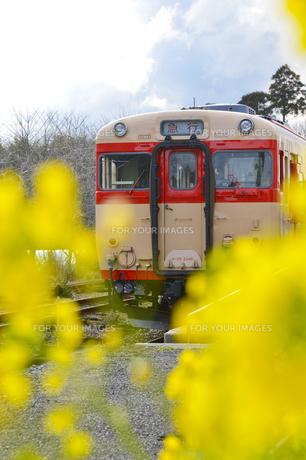 いすみ鉄道電車と菜の花の素材 [FYI01001200]