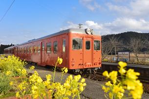 いすみ鉄道電車と菜の花の素材 [FYI01001210]