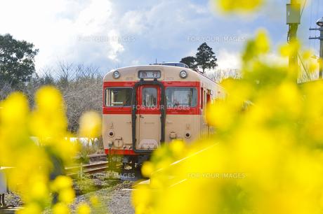 いすみ鉄道電車と菜の花の素材 [FYI01001276]