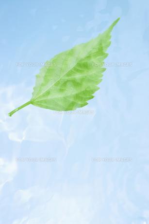 水中に舞う葉っぱの素材 [FYI01003372]