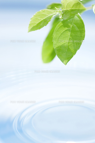 葉と水面の波紋の素材 [FYI01003398]