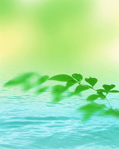 新緑イメージ 葉と水面の素材 [FYI01003474]
