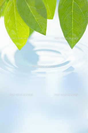 葉と水面の波紋の素材 [FYI01003477]