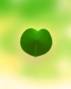新緑イメージ 葉の素材 [FYI01003685]