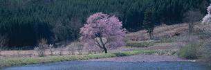 種蒔桜のある田園風景の素材 [FYI01004174]