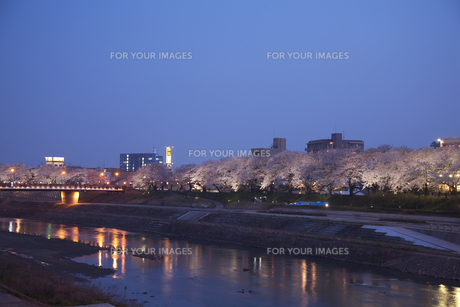足羽川と福井市の町並みと桜並木の素材 [FYI01004688]