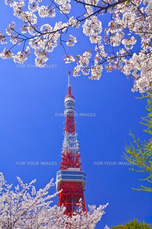 東京タワーと桜の素材 [FYI01009299]