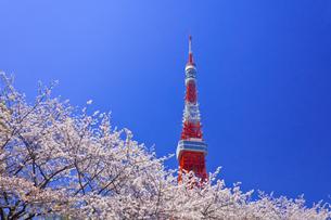 東京タワーと桜の素材 [FYI01009447]