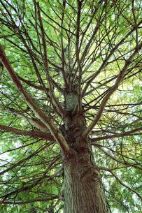 樹木の素材 [FYI01011883]