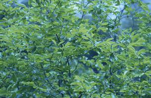 新緑の素材 [FYI01012021]