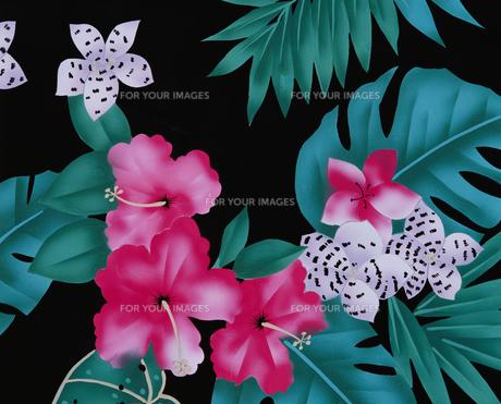 ハイビスカスなどの南国の花々イラストの素材 [FYI01012458]