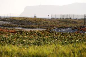 コロナドビーチの草の生える砂浜の素材 [FYI01013543]