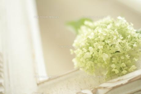白いフレームの鏡の上のビバーナムの素材 [FYI01014443]