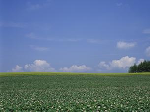 ジャガイモ畑と空の素材 [FYI01015484]