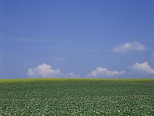 ジャガイモ畑と空の素材 [FYI01015530]
