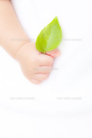 葉を持つ赤ちゃんの手の素材 [FYI01016399]