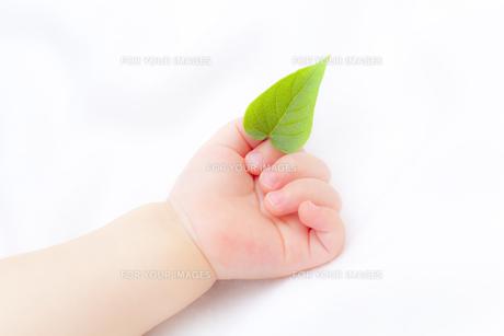 葉を持つ赤ちゃんの手の素材 [FYI01016403]