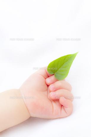 葉を持つ赤ちゃんの手の素材 [FYI01016422]
