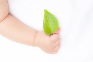 葉を持つ赤ちゃんの手の素材 [FYI01016450]