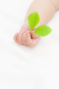 葉を持つ赤ちゃんの手の素材 [FYI01016460]