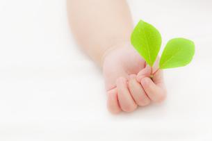 葉を持つ赤ちゃんの手の素材 [FYI01016461]
