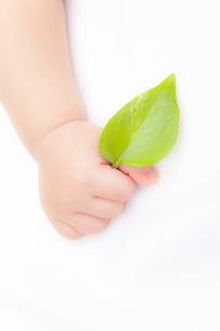 葉を持つ赤ちゃんの手の素材 [FYI01016466]