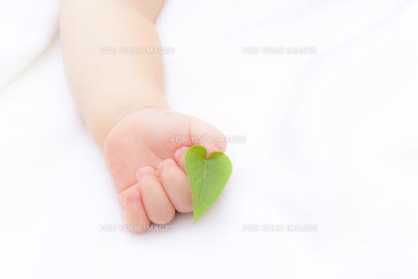 葉を持つ赤ちゃんの手の素材 [FYI01016471]