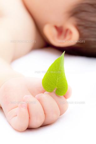 葉を持つ赤ちゃんの素材 [FYI01016480]