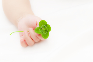 四葉のクローバーを持つ赤ちゃんの手の素材 [FYI01016483]