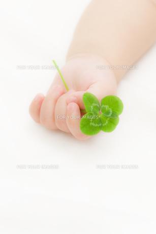 四葉のクローバーを持つ赤ちゃんの手の素材 [FYI01016492]
